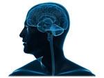 TBI-brain-image-150w